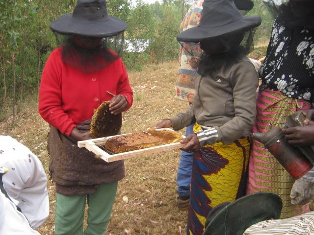 Visite de rucher au Rwanda