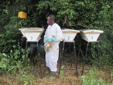 babeilles-afrique-burkina-faso (6)(1)